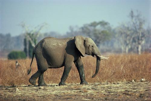 The Elephant Sanctuary