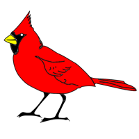 Picture of Cardinal