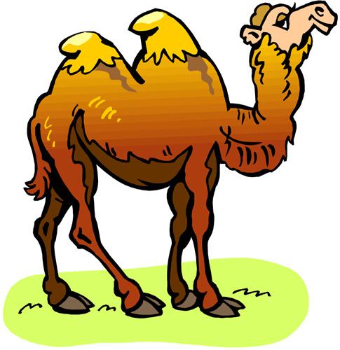 Camel - Duran
